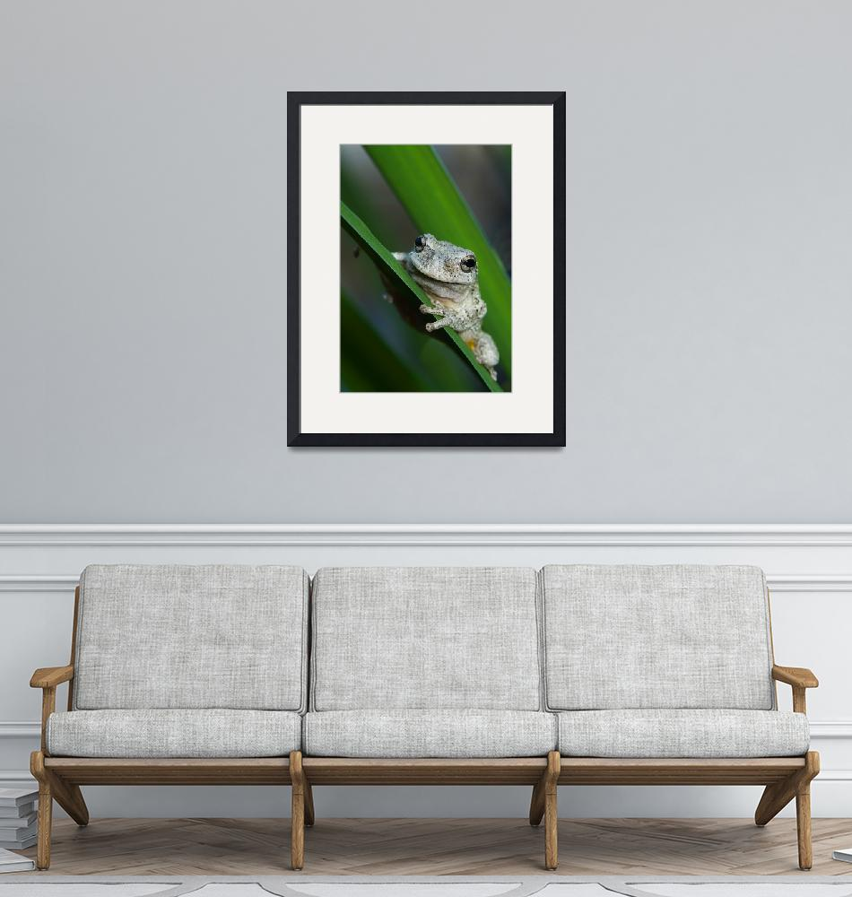 """""""The prince of frogs""""  by naturally"""