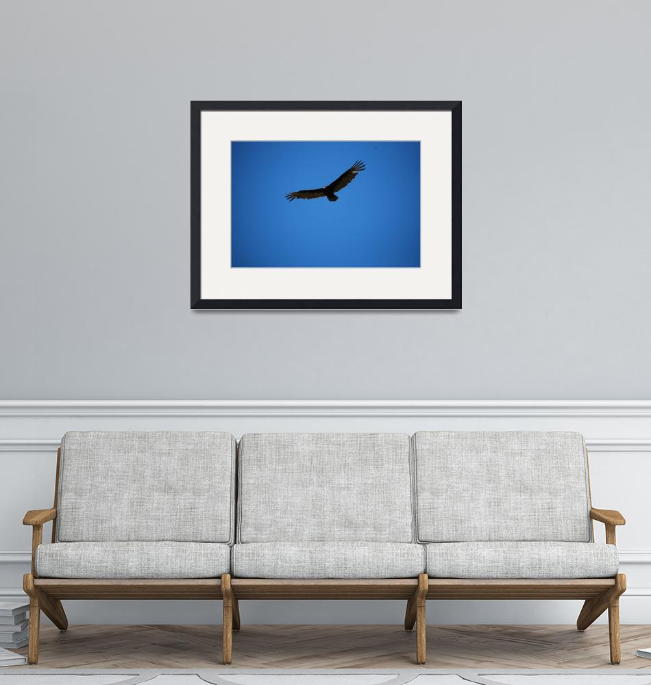"""""""BLUE SKY WITH BUZZARD""""  (2010) by seewater"""