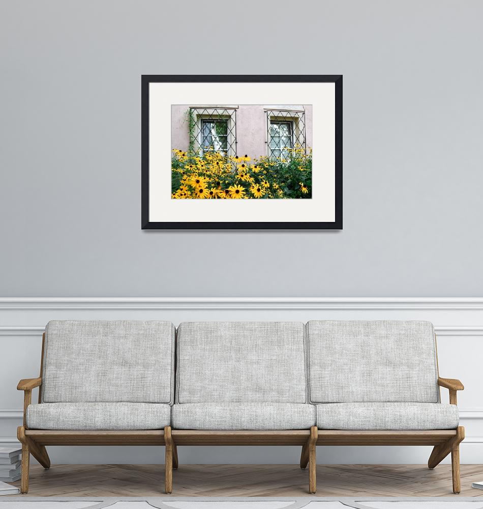 """""""Black-Eyed Susans""""  by JeanniesPhotography"""