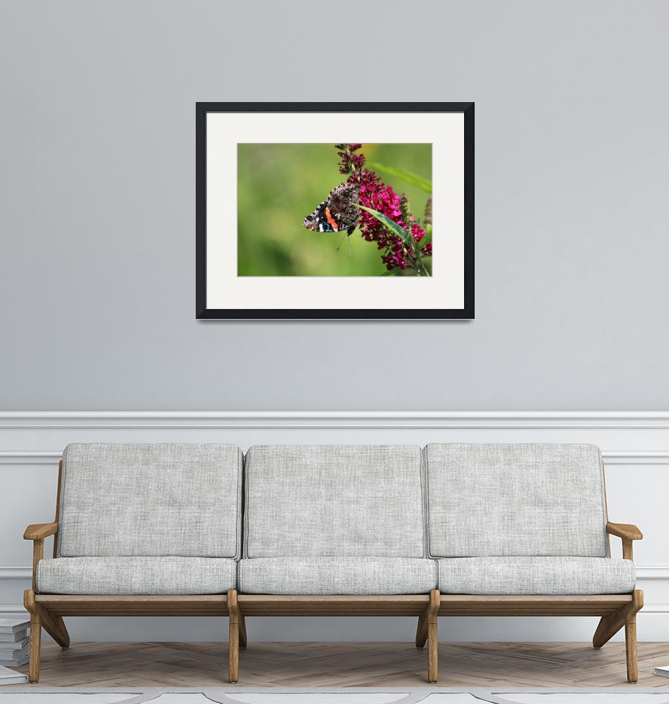 """Red Admiral Butterfly Upside Down in Garden 2015""  (2015) by KsWorldArt"