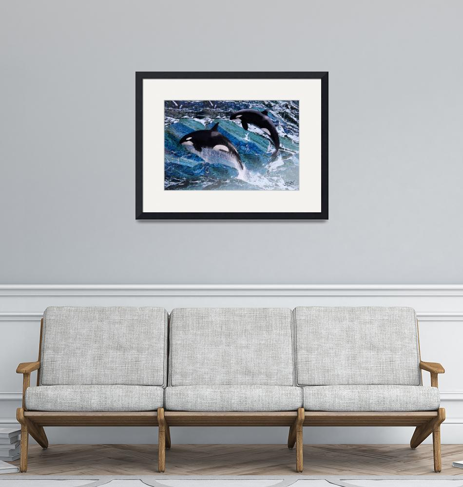 """""""Wild Orca Whales of Florida""""  (2014) by spadecaller"""