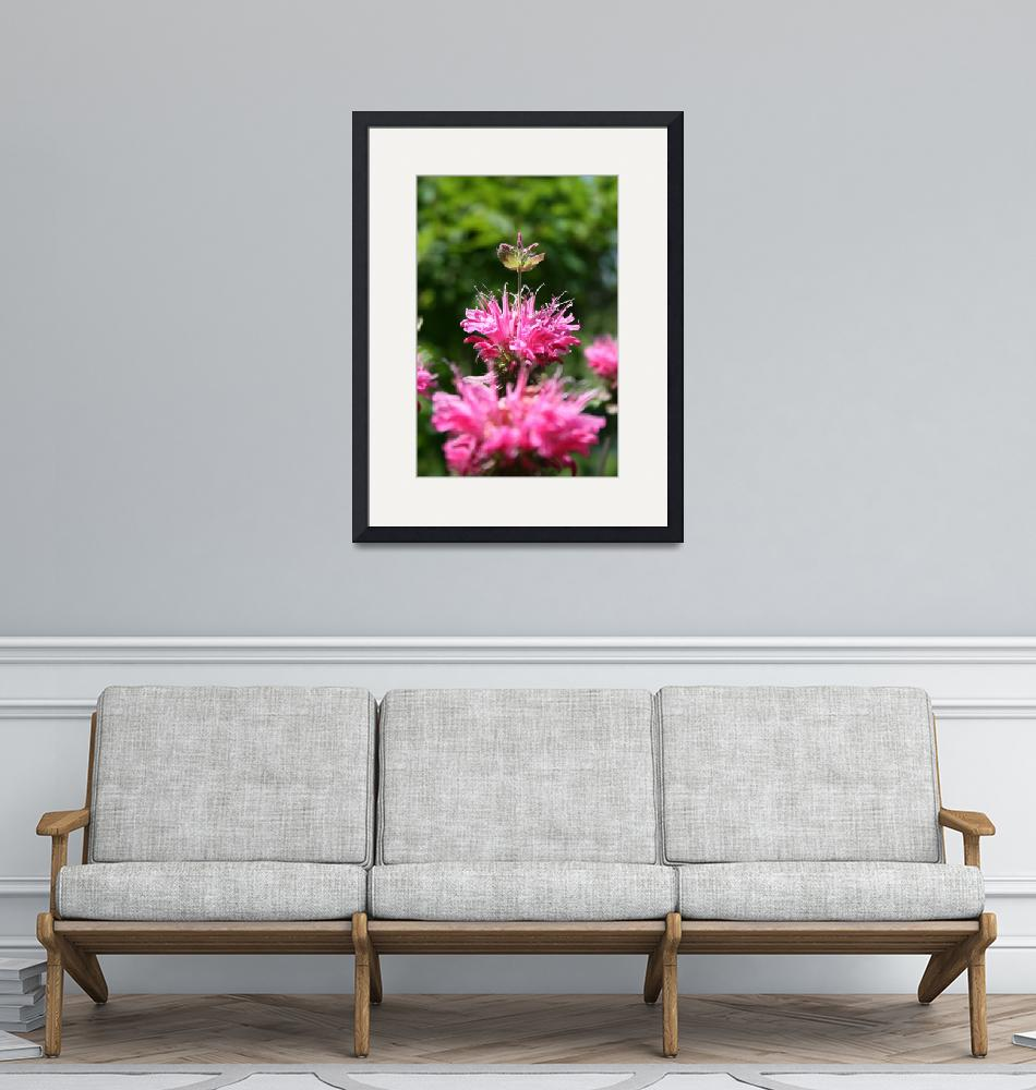 """""""Bee Balm Crown Jewel of The Garden""""  (2009) by perceptionphotography"""