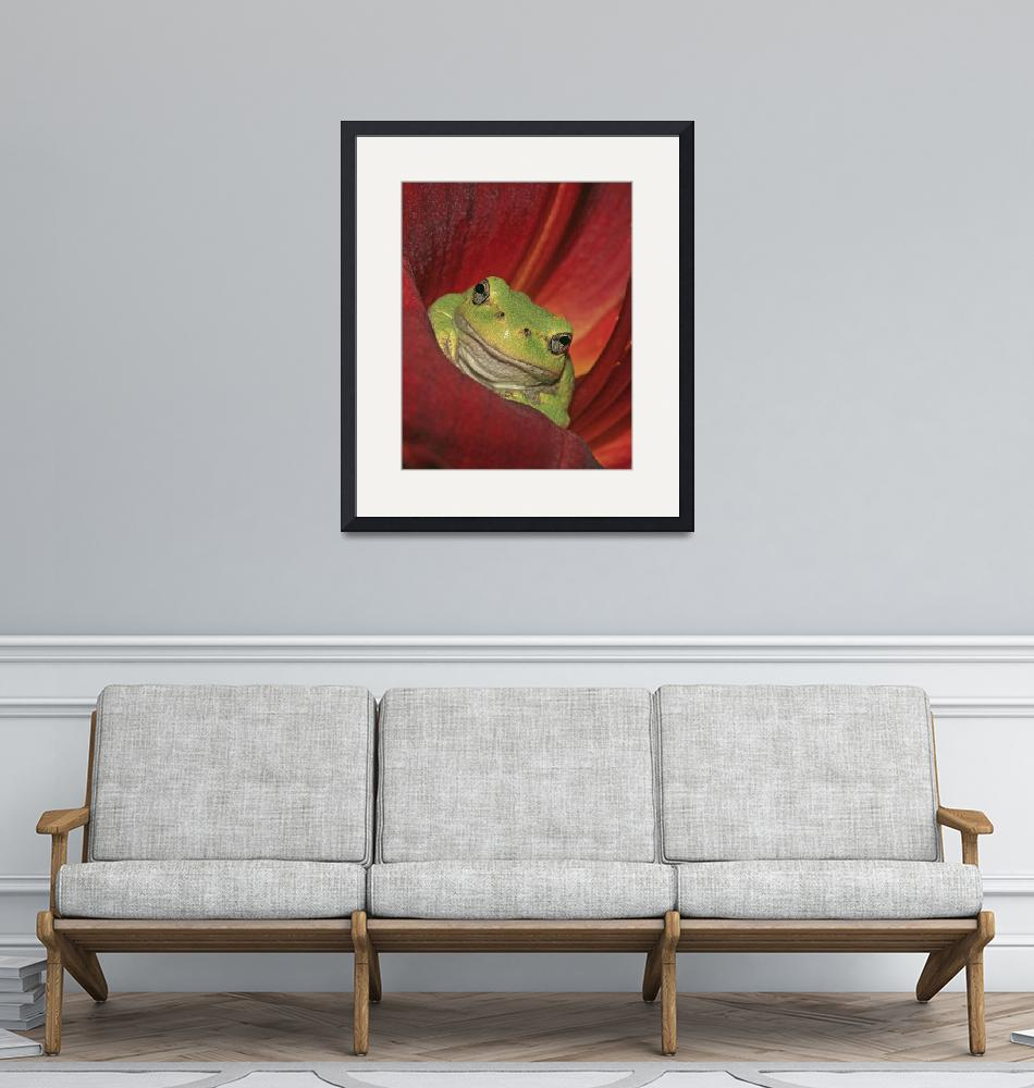 """""""Lily Frog""""  (2011) by SkeieScapes"""