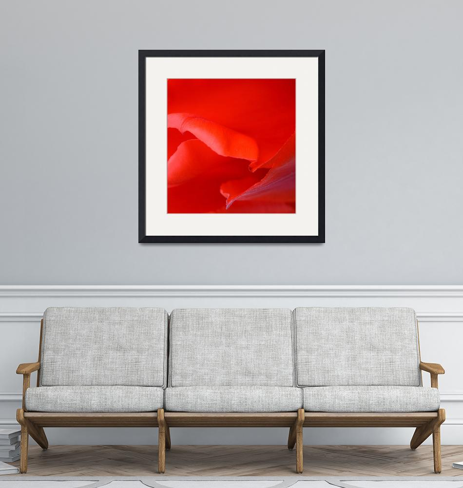 """""Red Tulip 5"" #5042315.0678 (4)""  (2015) by achimkrasenbrinkart"