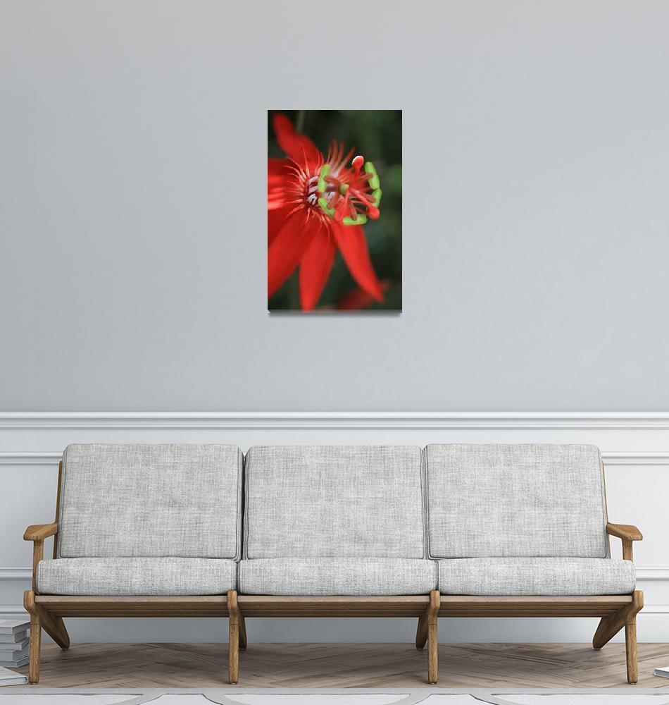 """Passiflora vitifolia Scarlet Red Passion Flower""  (2011) by sharonmau"