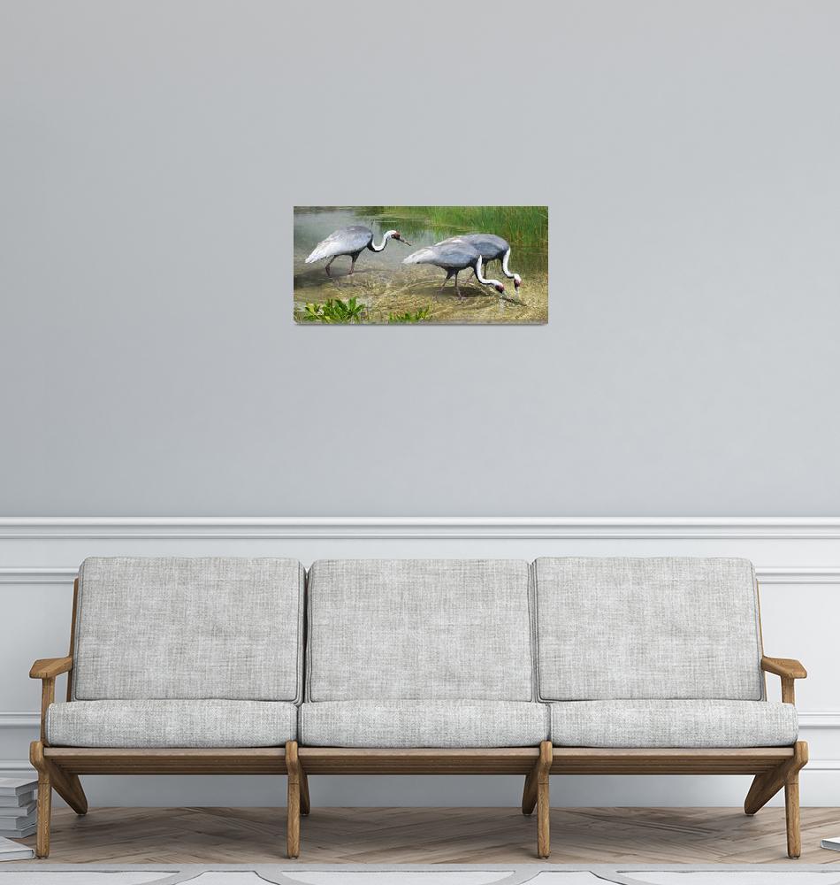 """white naped cranes forage""  (2015) by rchristophervest"