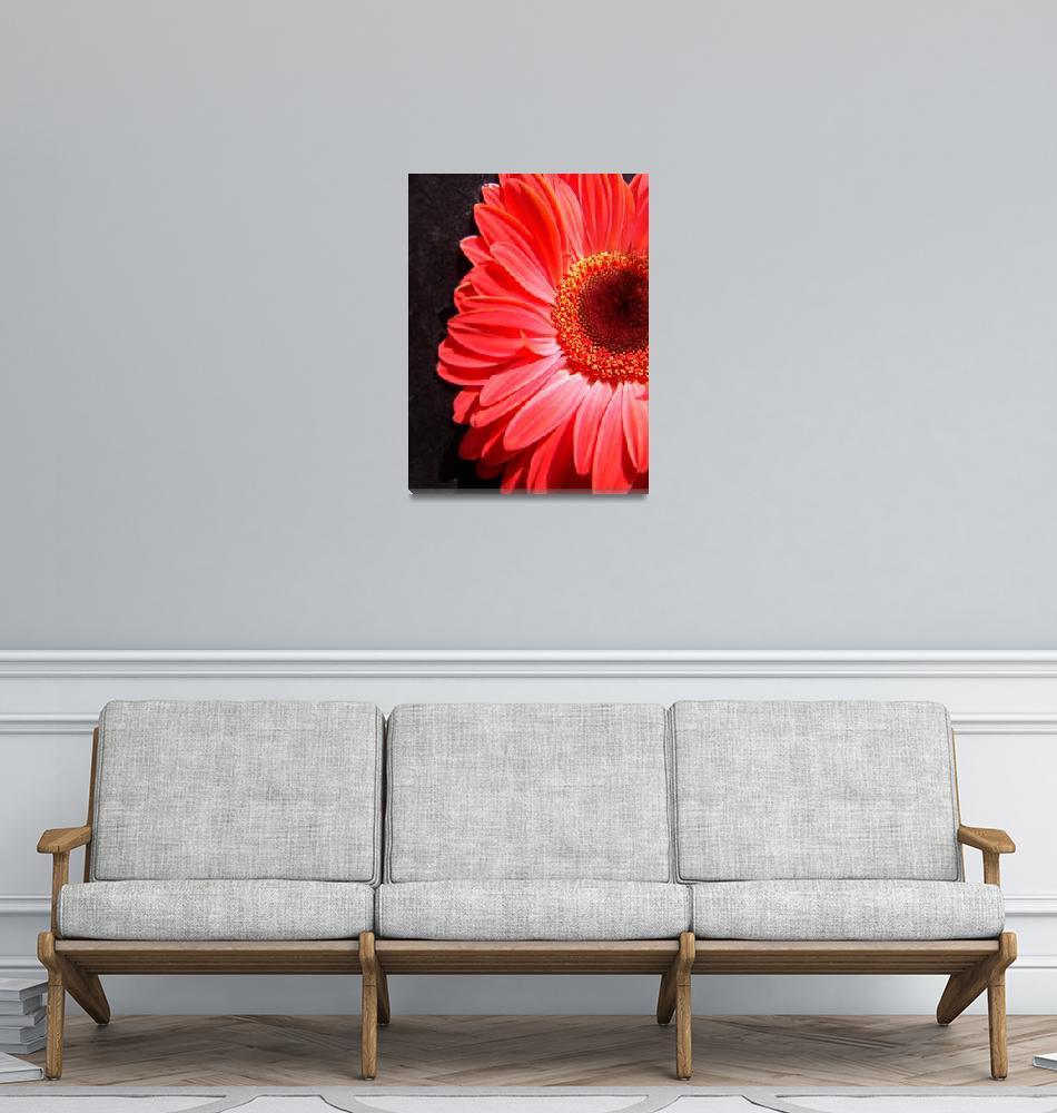 """""""Red Gerbera Daisy Luxurious""""  (2006) by Infomages"""