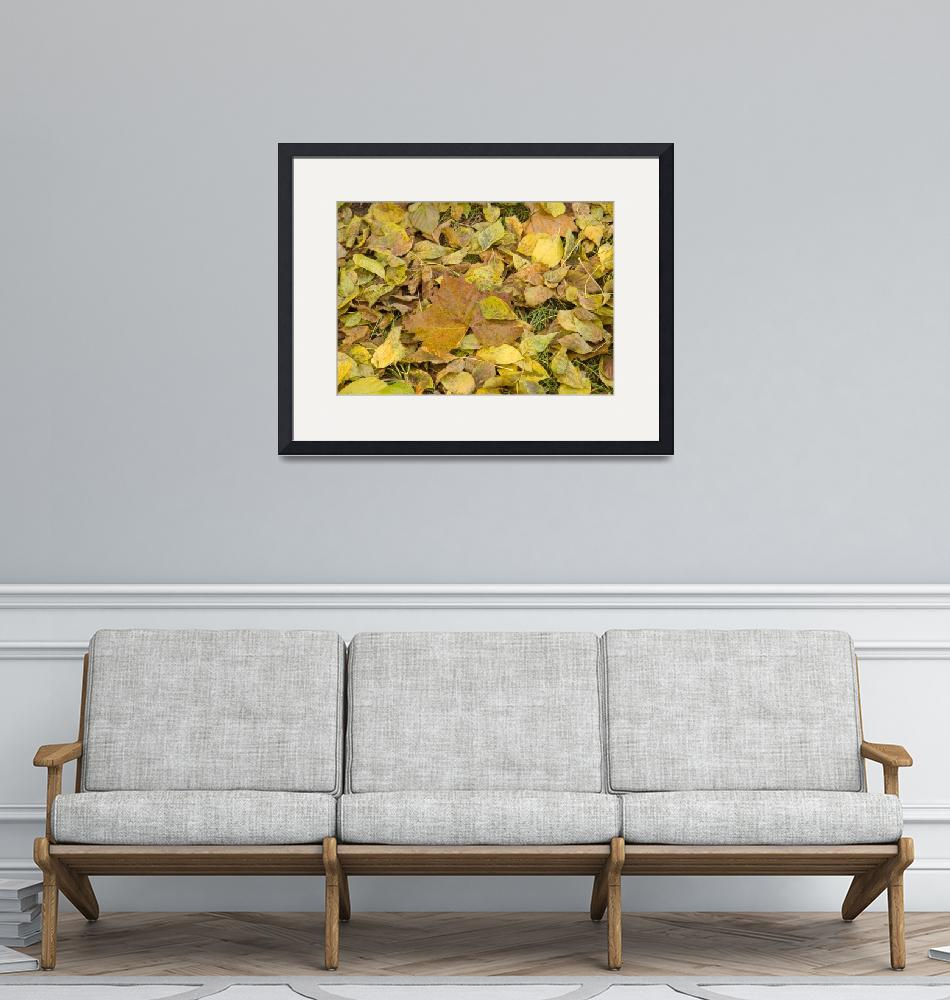 """""""Golden Fall Leaves""""  by CooperSlay"""
