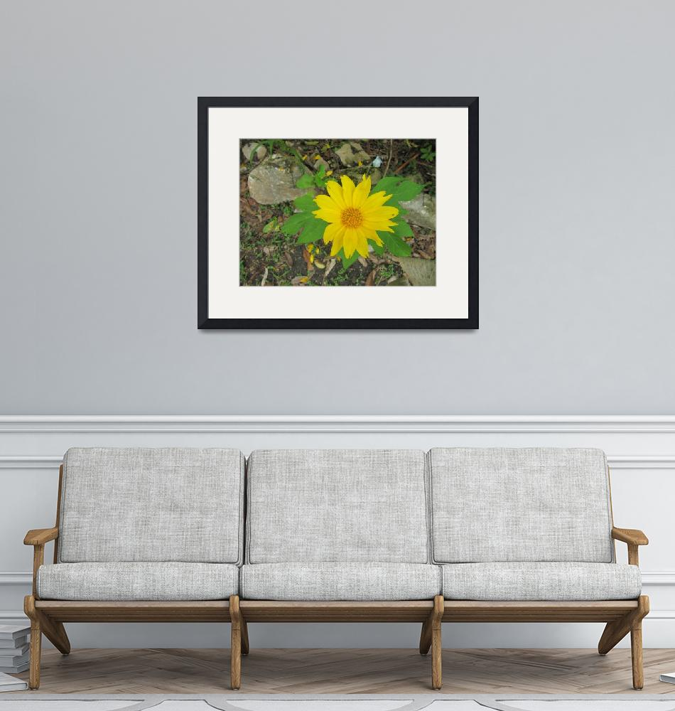 """""""Flower in Nature""""  (2011) by SWFLPhoto239"""
