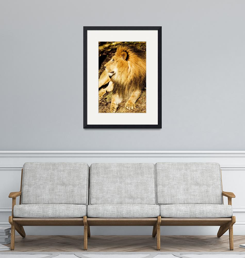 """""""African  Lion at The Columbus Zoo""""  (2009) by artistslight"""