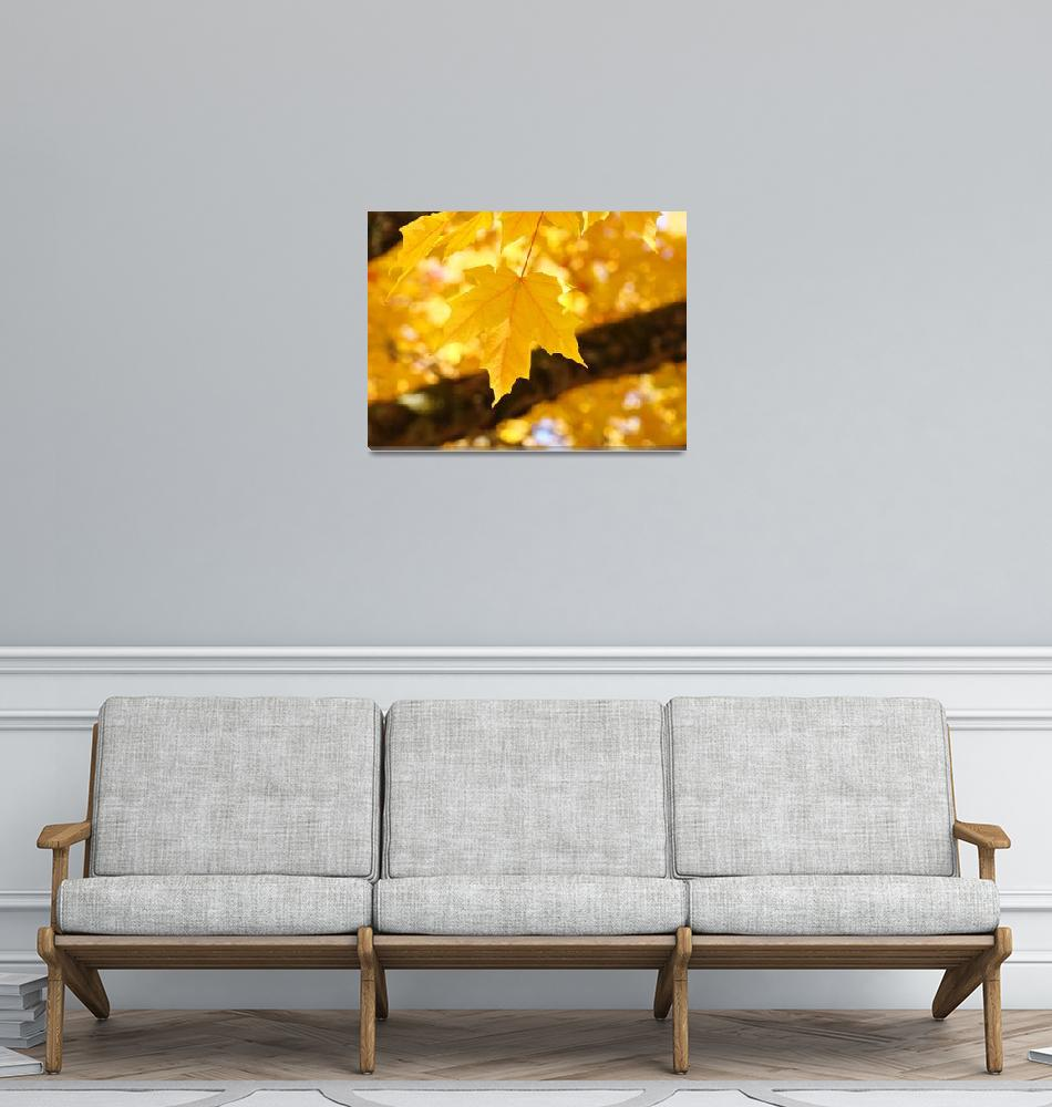 """""""Glowing Sunlit Yellow Autumn Leaves Trees""""  (2014) by BasleeTroutman"""