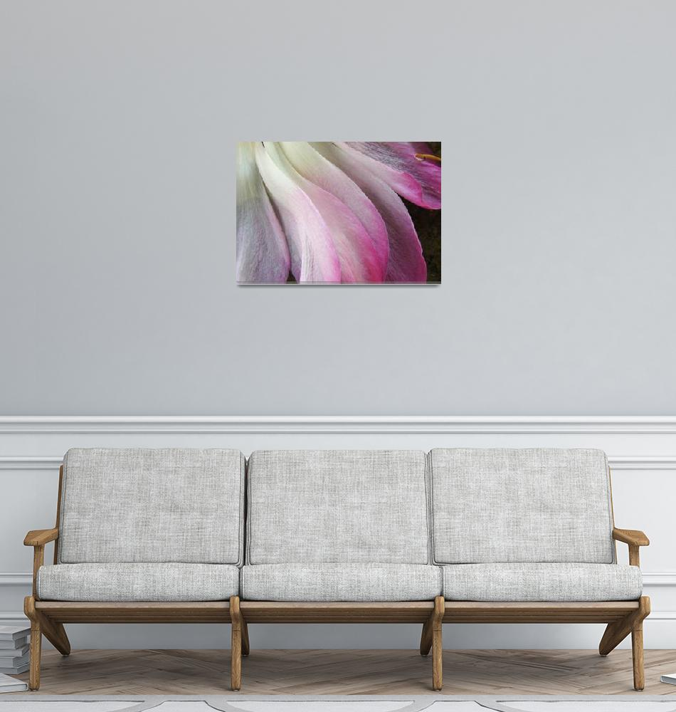 """Fallen Lotus Petals""  (2008) by DivineNature"