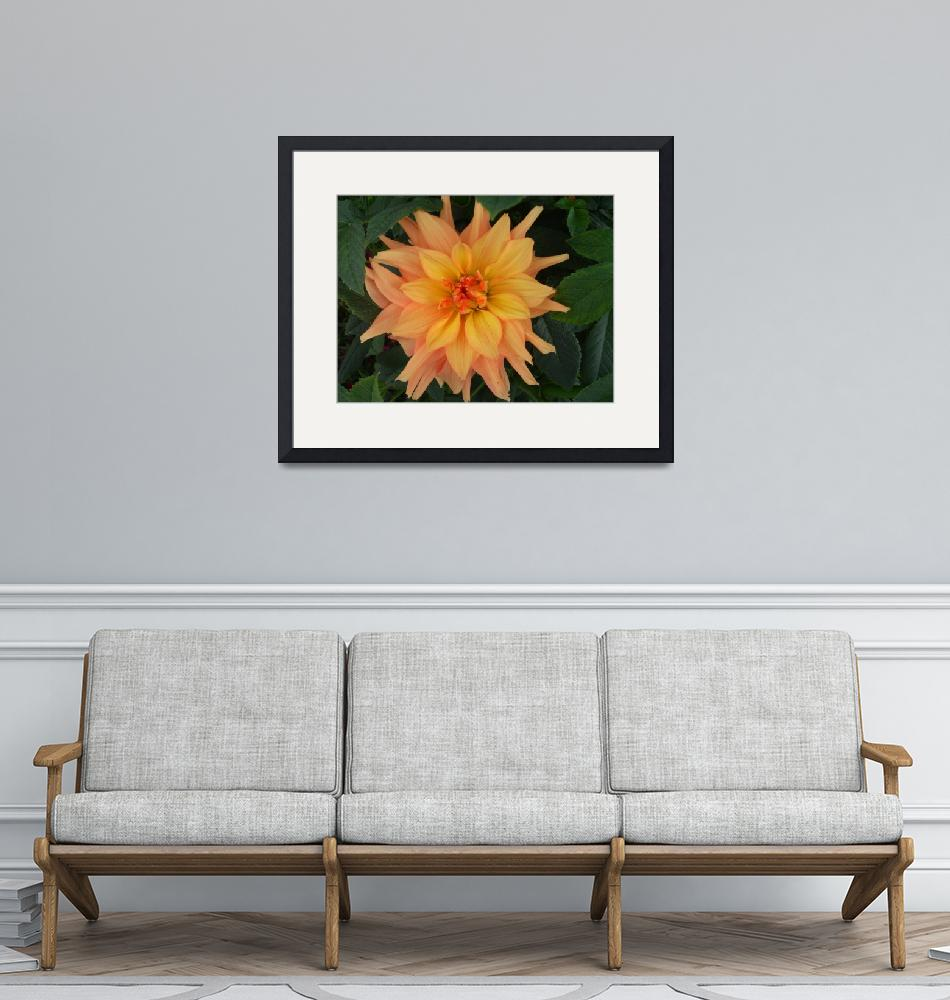 """Peach & Yellow Dahlia""  (2013) by StephanieBrower"