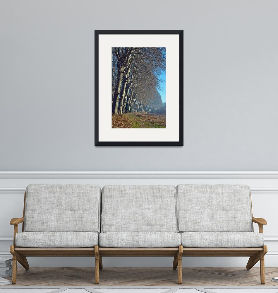 """""""The Plane Trees""""  (2008) by ImageArt-Photography"""