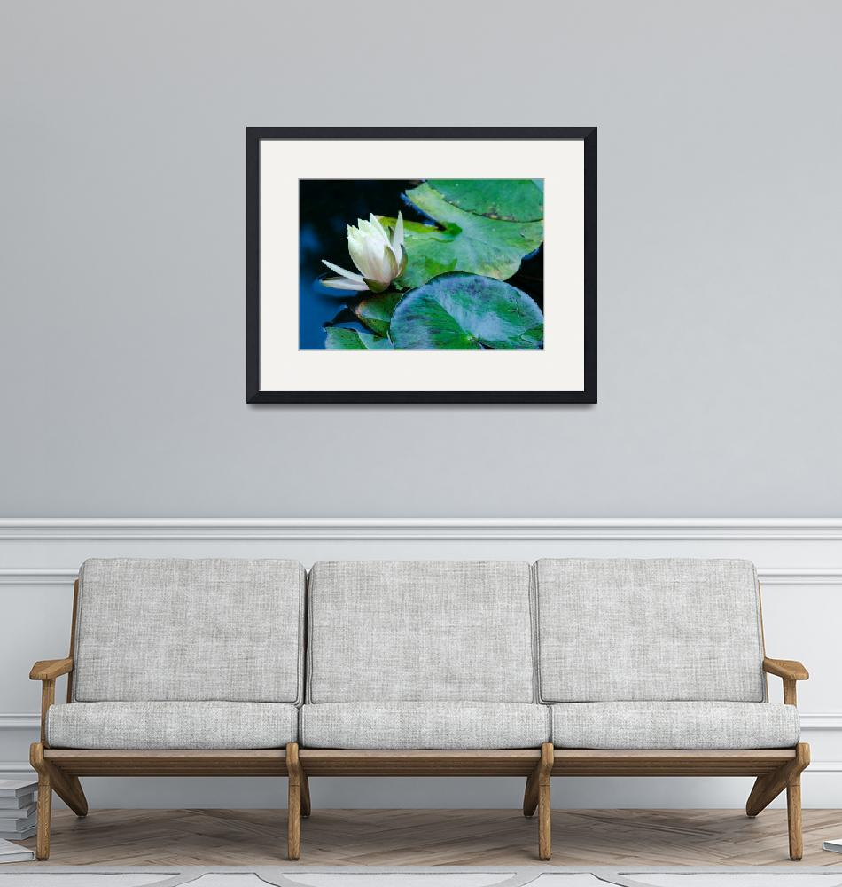 """""""Water Lily""""  (2013) by boppintheblues"""