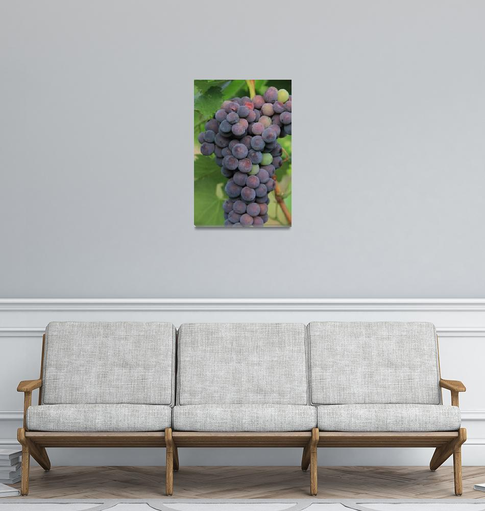 """Grapes""  (2011) by easyfigure"