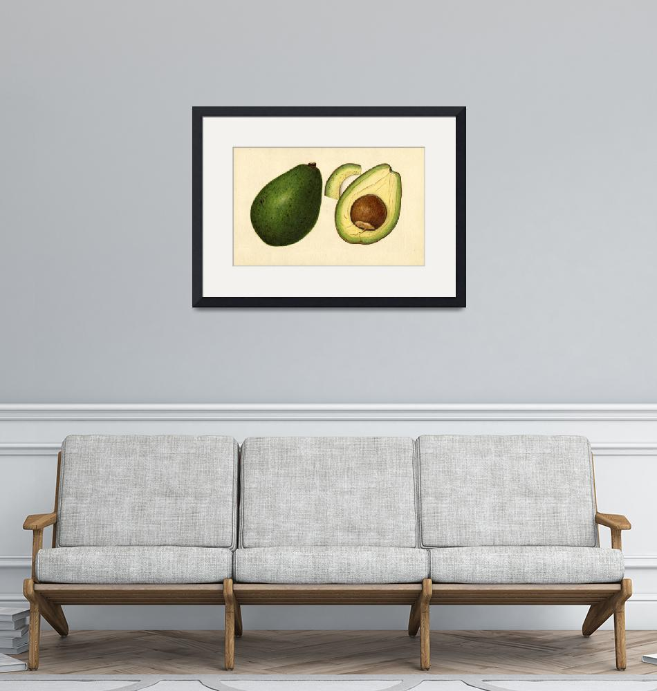 """""""Vintage Illustration of an Avocado 2""""  by Alleycatshirts"""