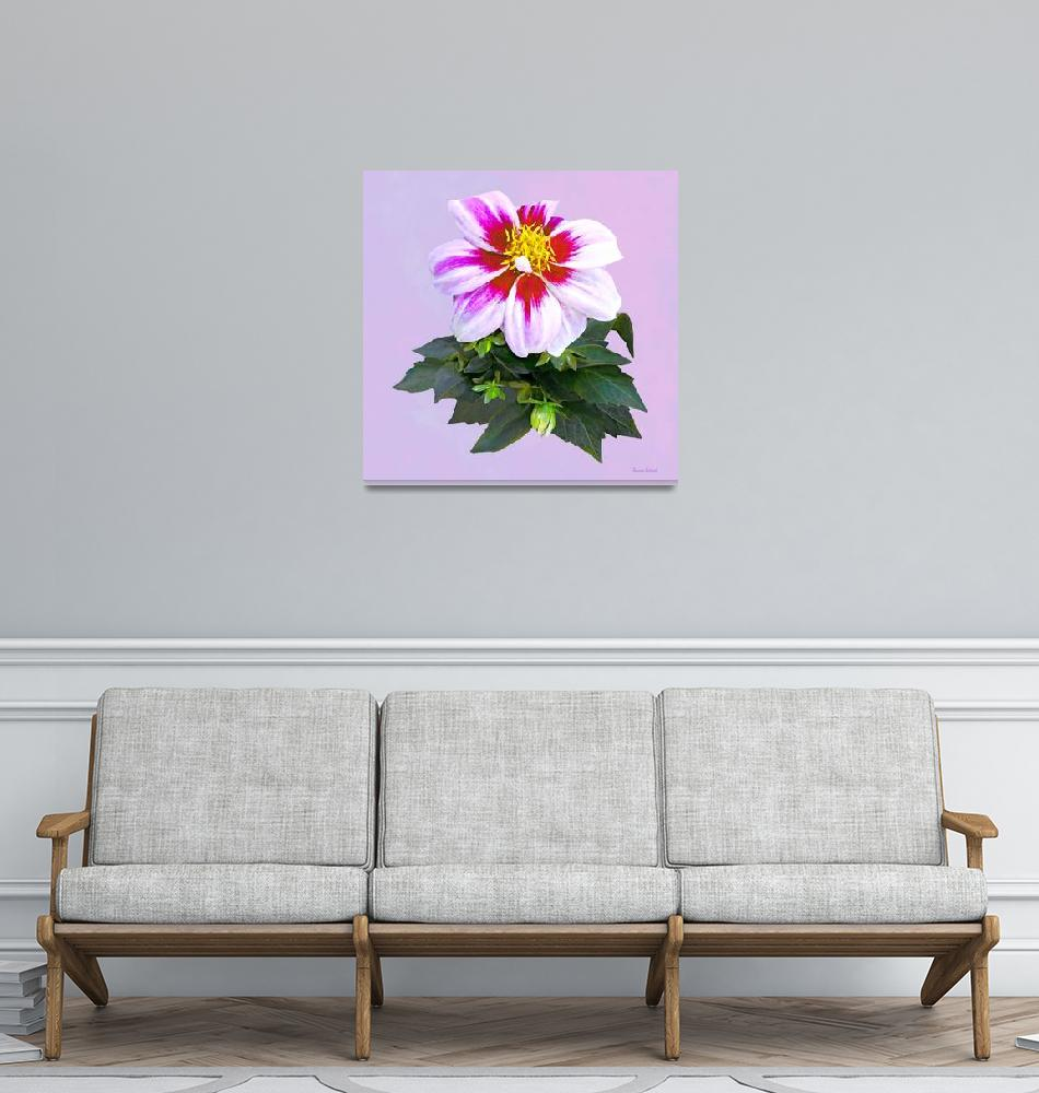 """""""Two-Toned Pink Dahlia""""  by susansartgallery"""