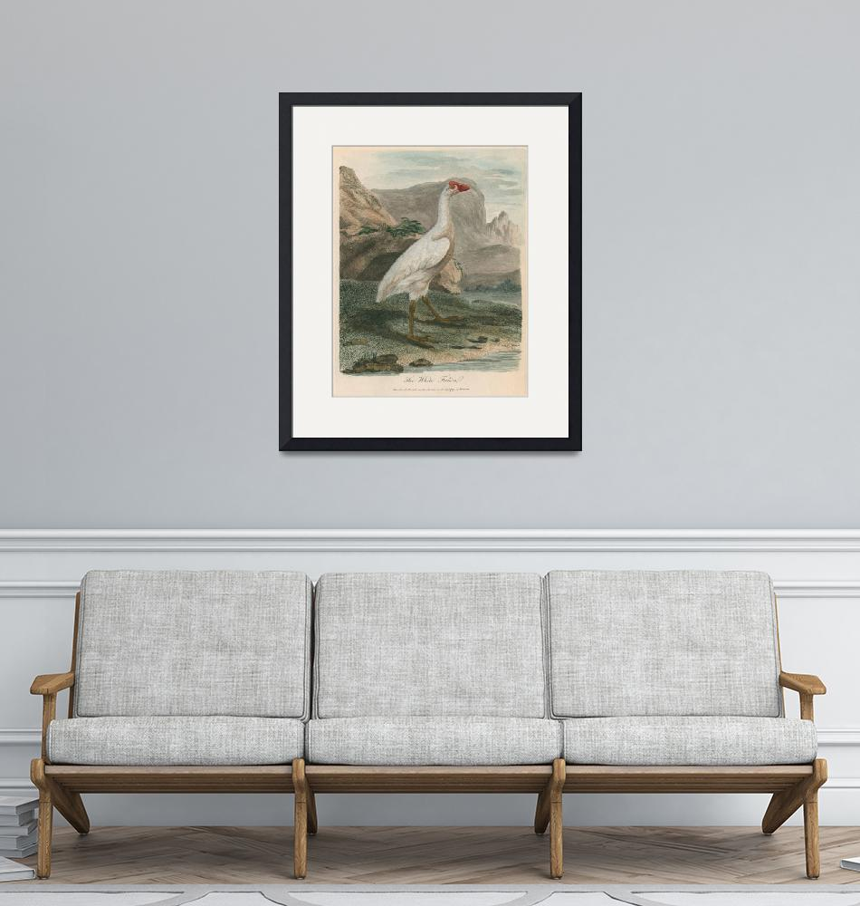 """""""Sarah Stone (1760-1844)~Ornithological study of a""""  by Old_master"""