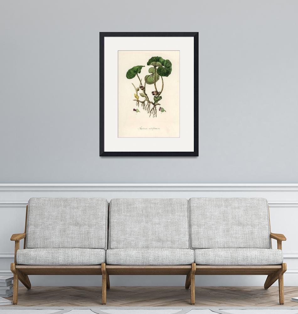 """Vintage Botanical European Wild Ginger""  by FineArtClassics"