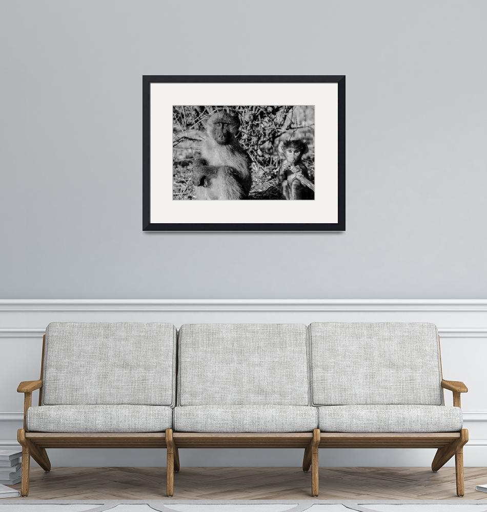 """""""Young Baboon and Baby Black and White Photograph""""  (2019) by JPRVenturesLLC"""