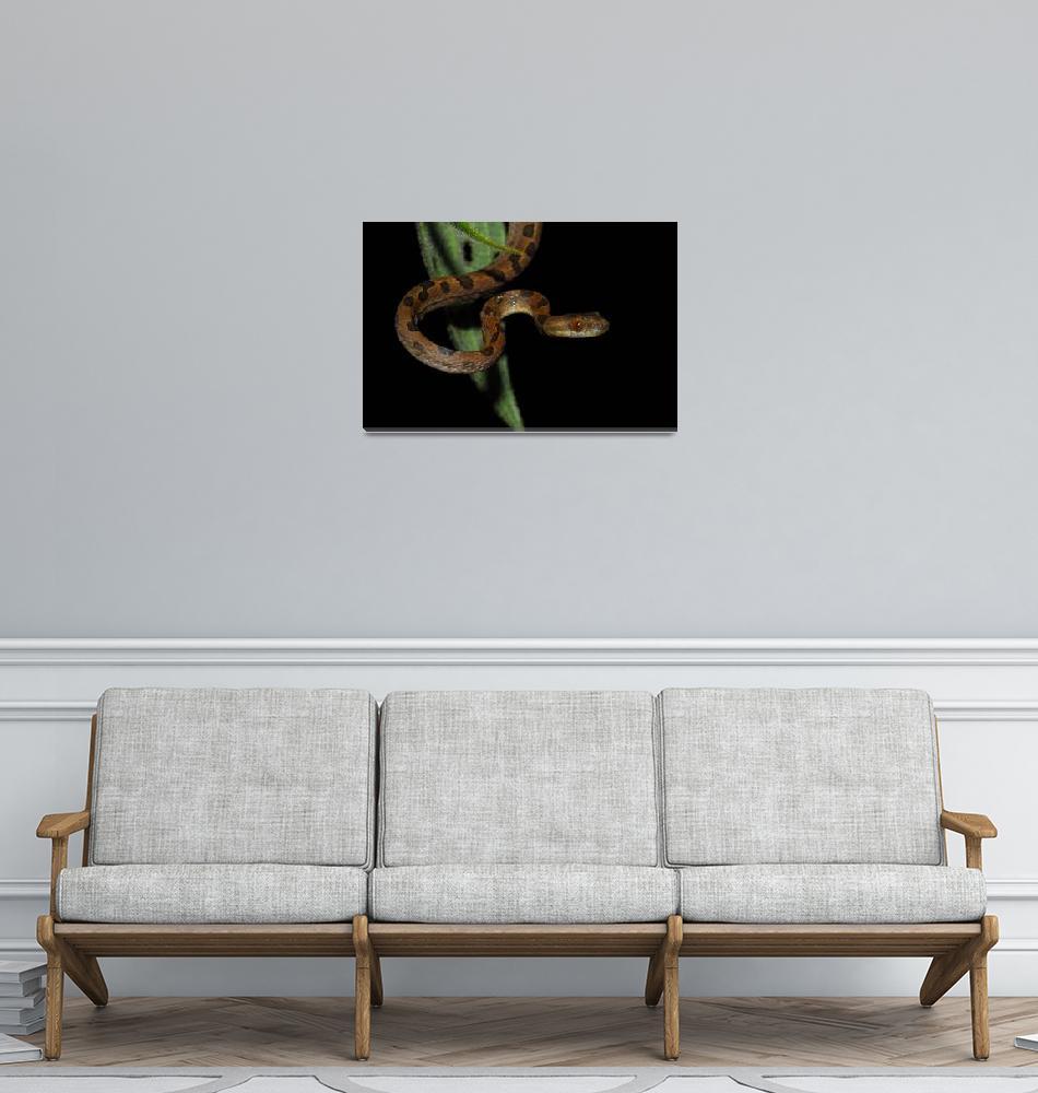 """Costa Rica Cat Eye Viper""  by trebman"