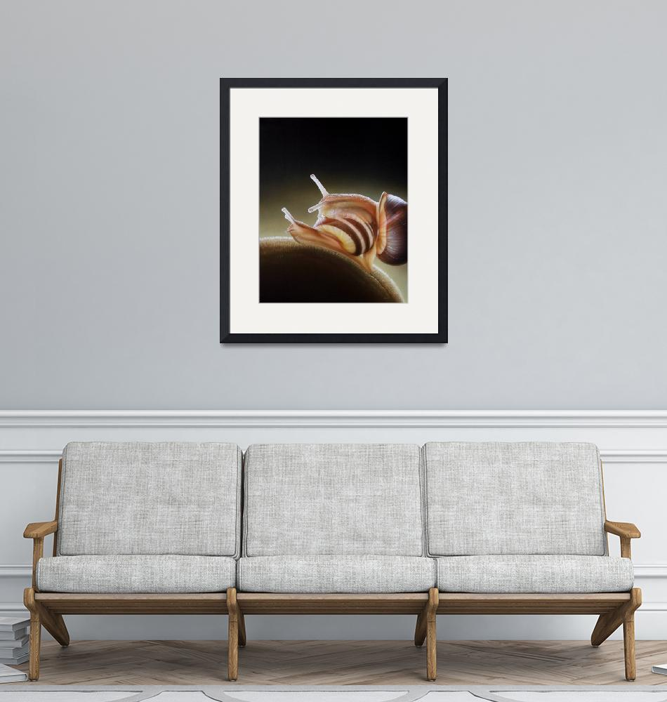 """""""Contact with snails"""" (2008) by schlichtholz"""