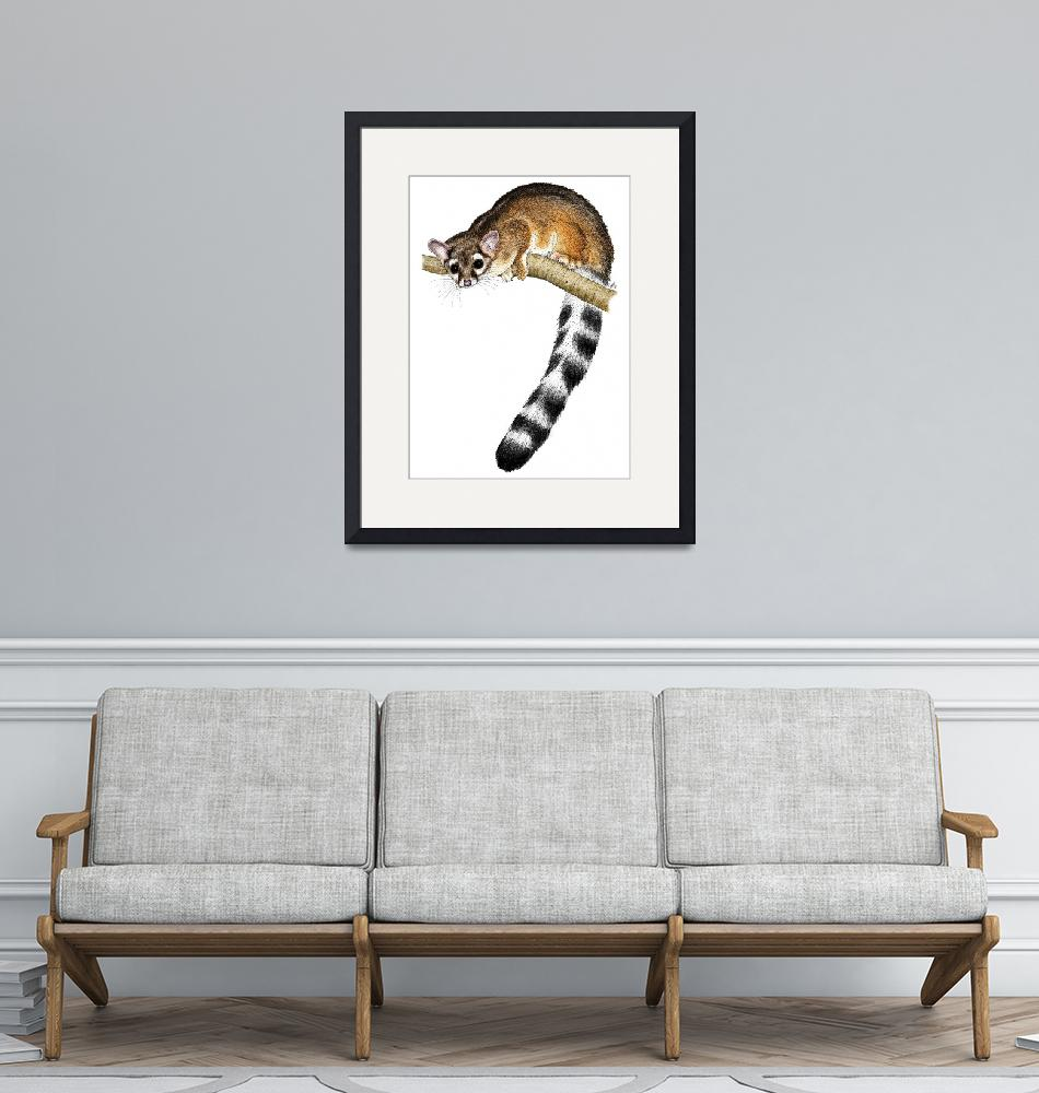 """""""Ring-Tailed Cat""""  (2010) by inkart"""