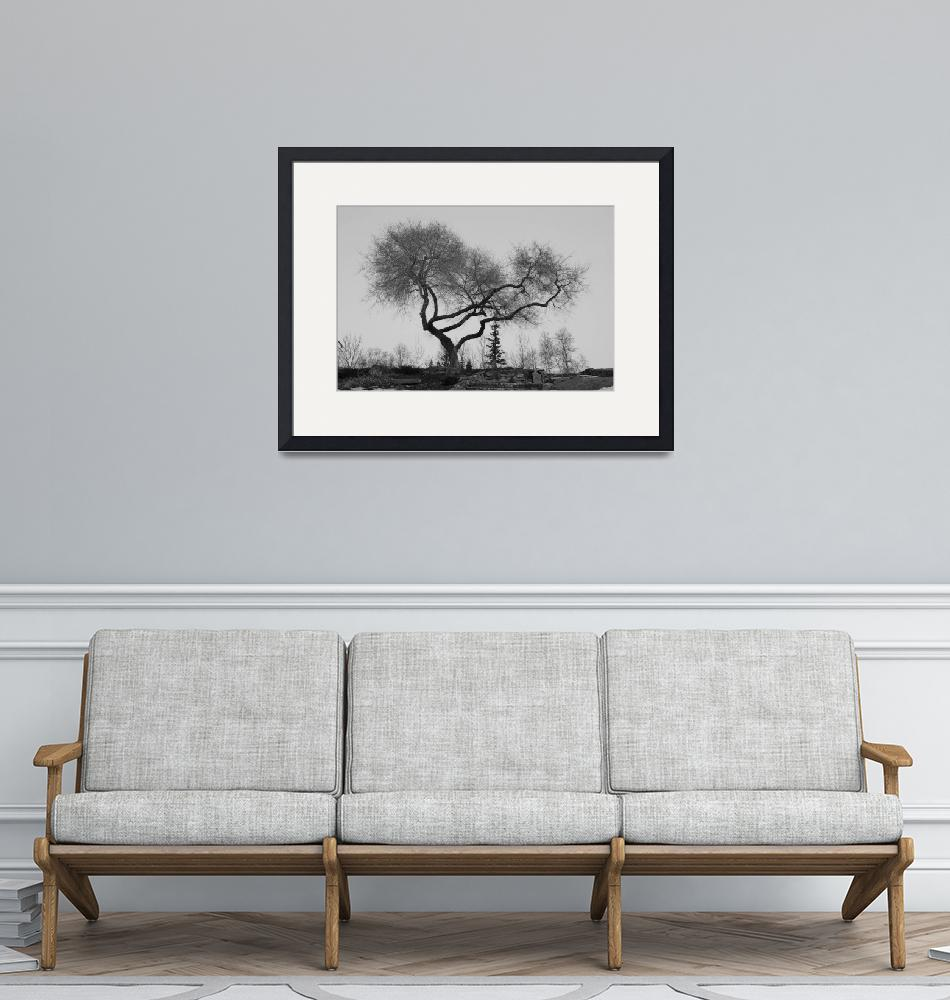 """""""Winter Tree on Cannaught""""  (2009) by dmarshall"""
