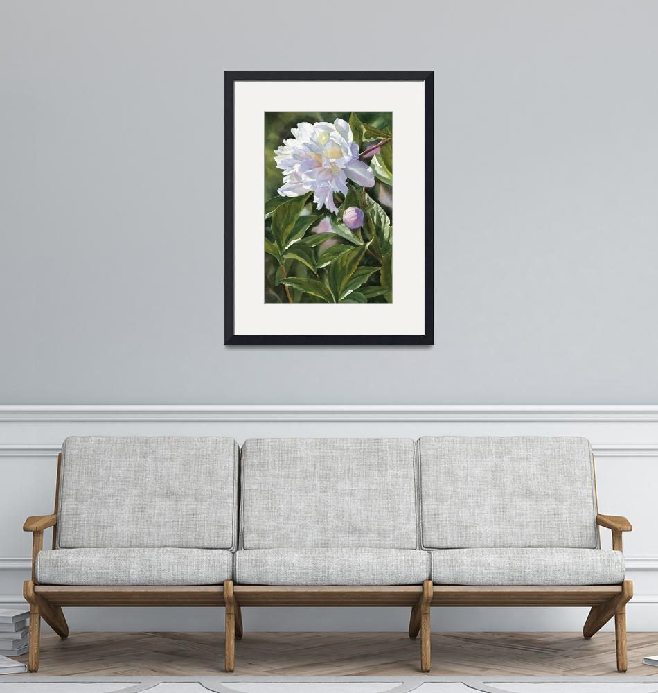 """""""White Peony with Bud""""  (2006) by Pacific-NW-Watercolors"""