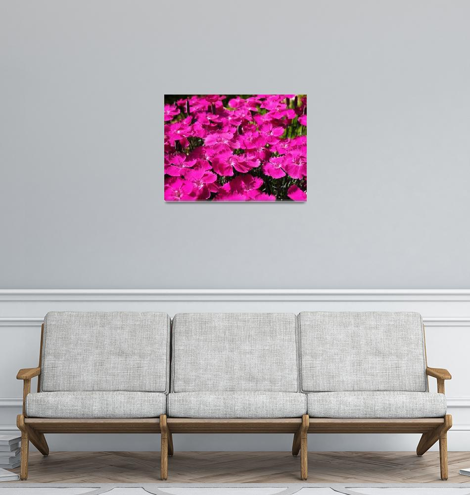 """Pink Dianthus Flowers""  (2011) by rewards4life"