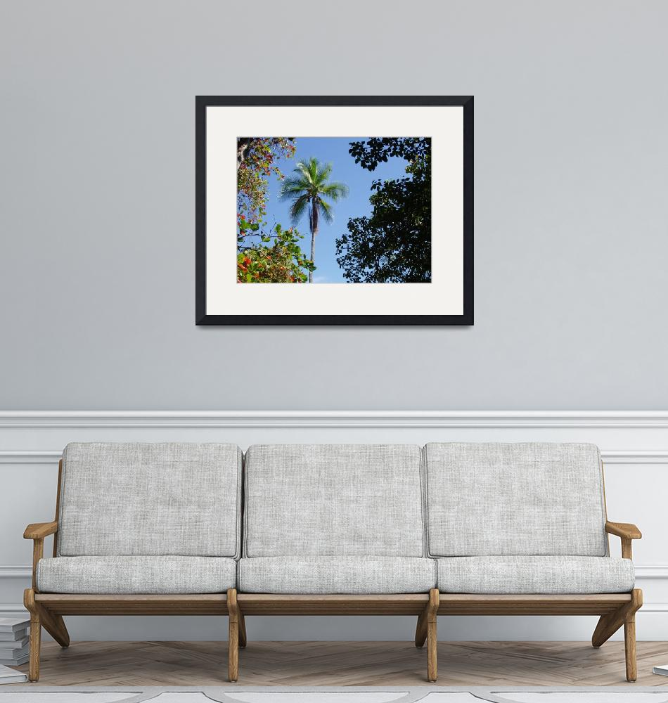 """""""Lone palm tree""""  by curtis_stacey"""