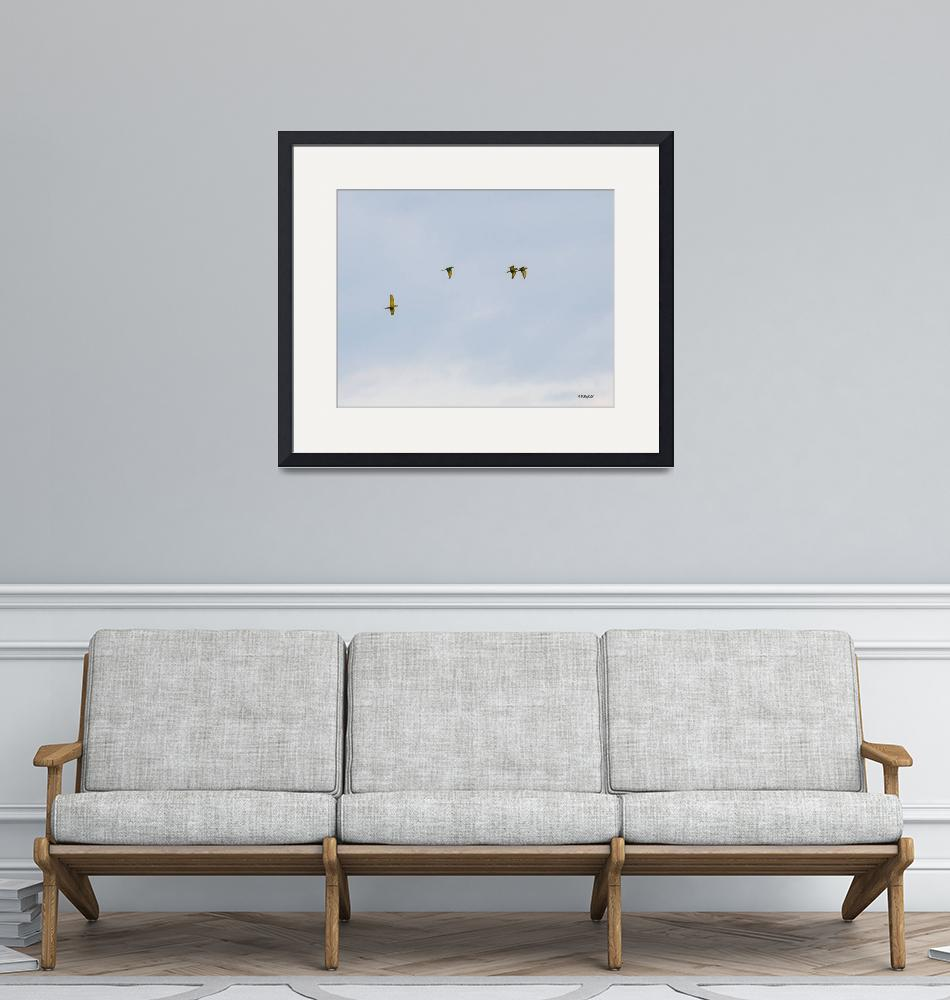 """Parrots Overhead""  (2014) by awsheffield"