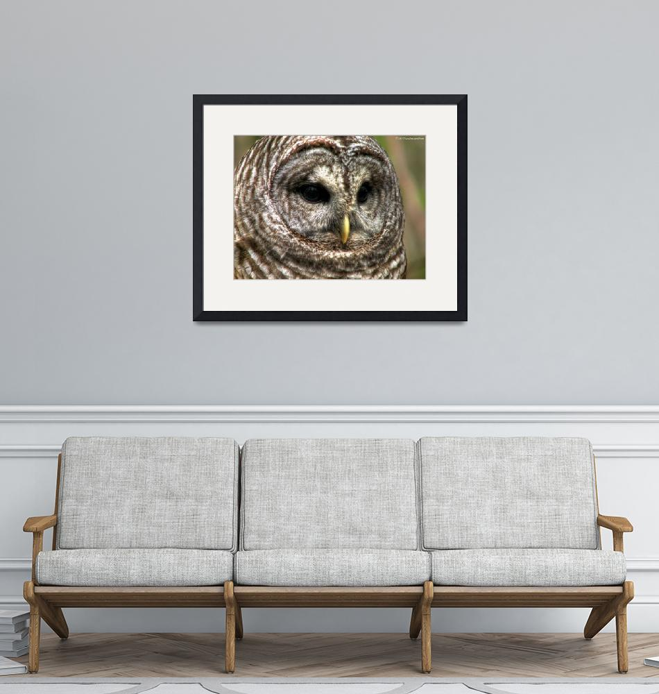 """""""Barred Owl""""  by AndreaNicole"""