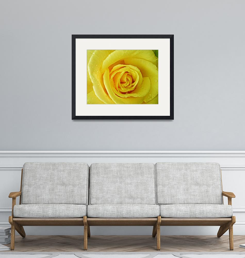 """Yellow Rose of""  (2009) by susanboogie"