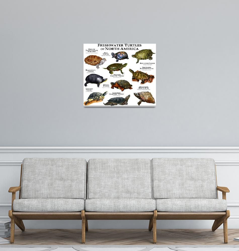 """""""Freshwater Turtles of North America""""  (2013) by inkart"""