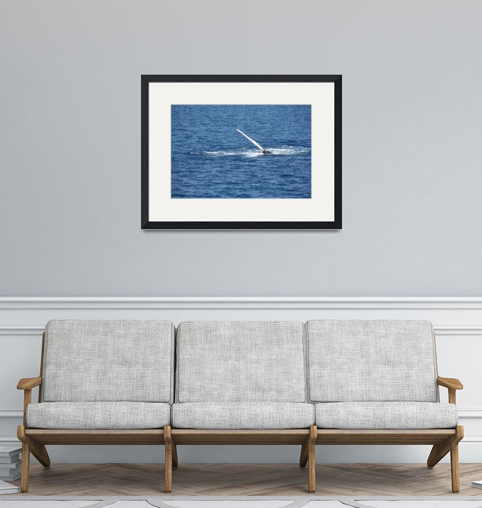 """NaP_ Whale Watching100""  by nevilleprosser"