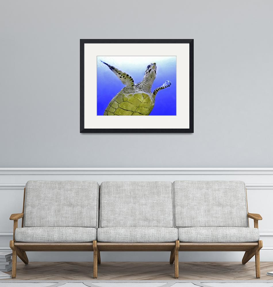 """""""Hawksbill Turtle Flyby""""  by SafariPrints"""