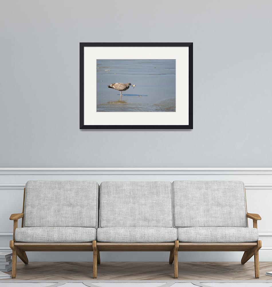 """""""Gull with Crab""""  (2012) by WildAboutNaturePhotography"""