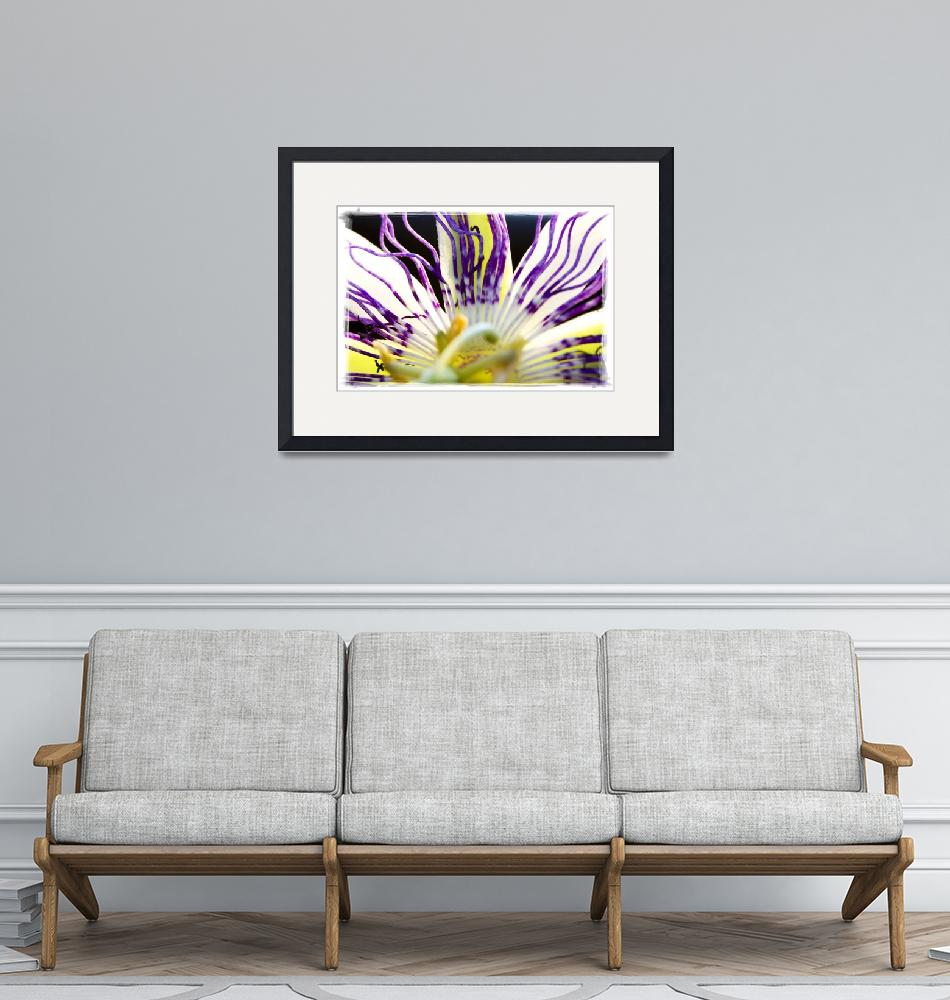 """""""Passion flower"""" (2012) by MarinaPhotography"""