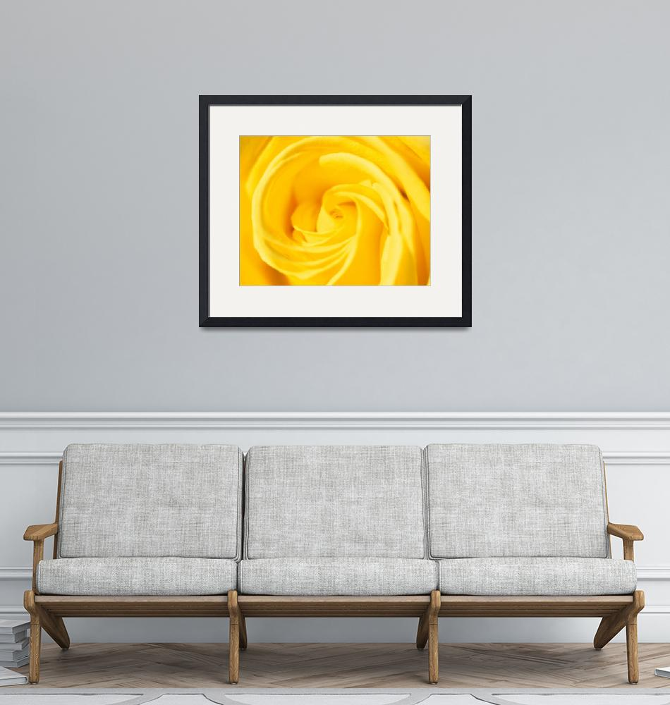 """""""Yellow Rose""""  by Kenneth"""