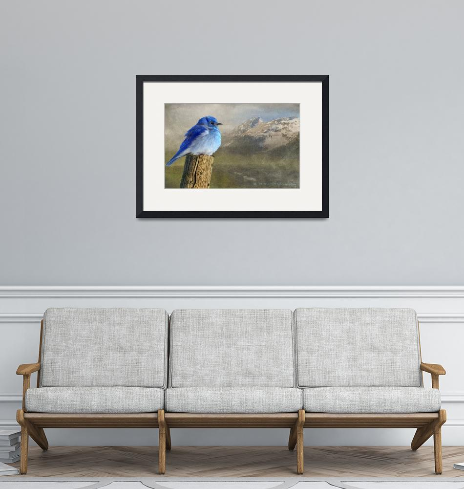 """early spring chill / mountain bluebird""  (2010) by rchristophervest"
