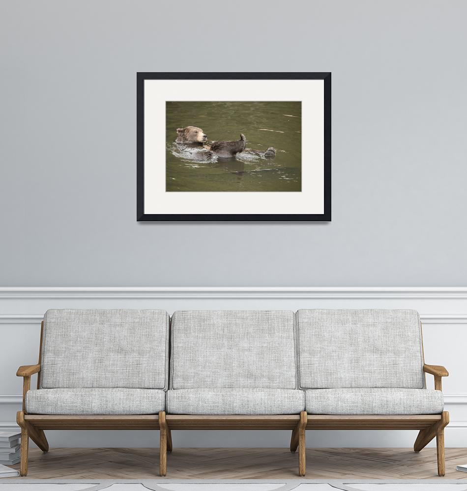 """""""Brown Bear Relaxing 2""""  (2018) by SederquistPhotography"""