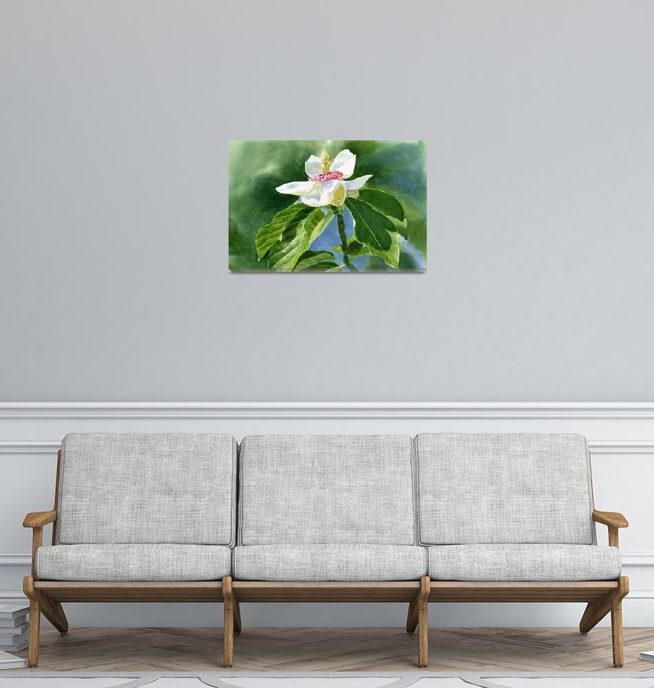 """""""White Magnolia""""  (2011) by Pacific-NW-Watercolors"""