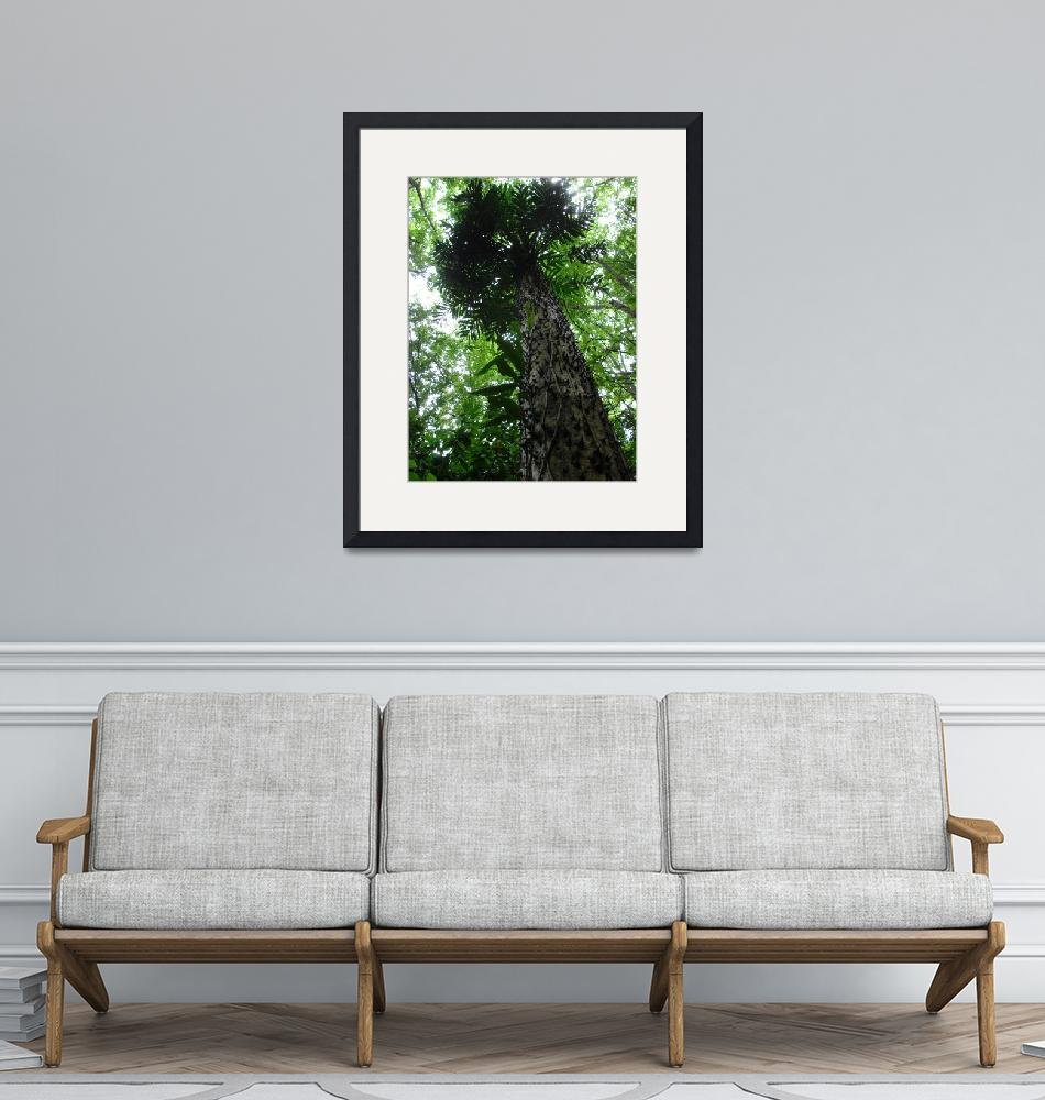 """""""Costa Rican Thorn Tree""""  (2007) by robvena"""