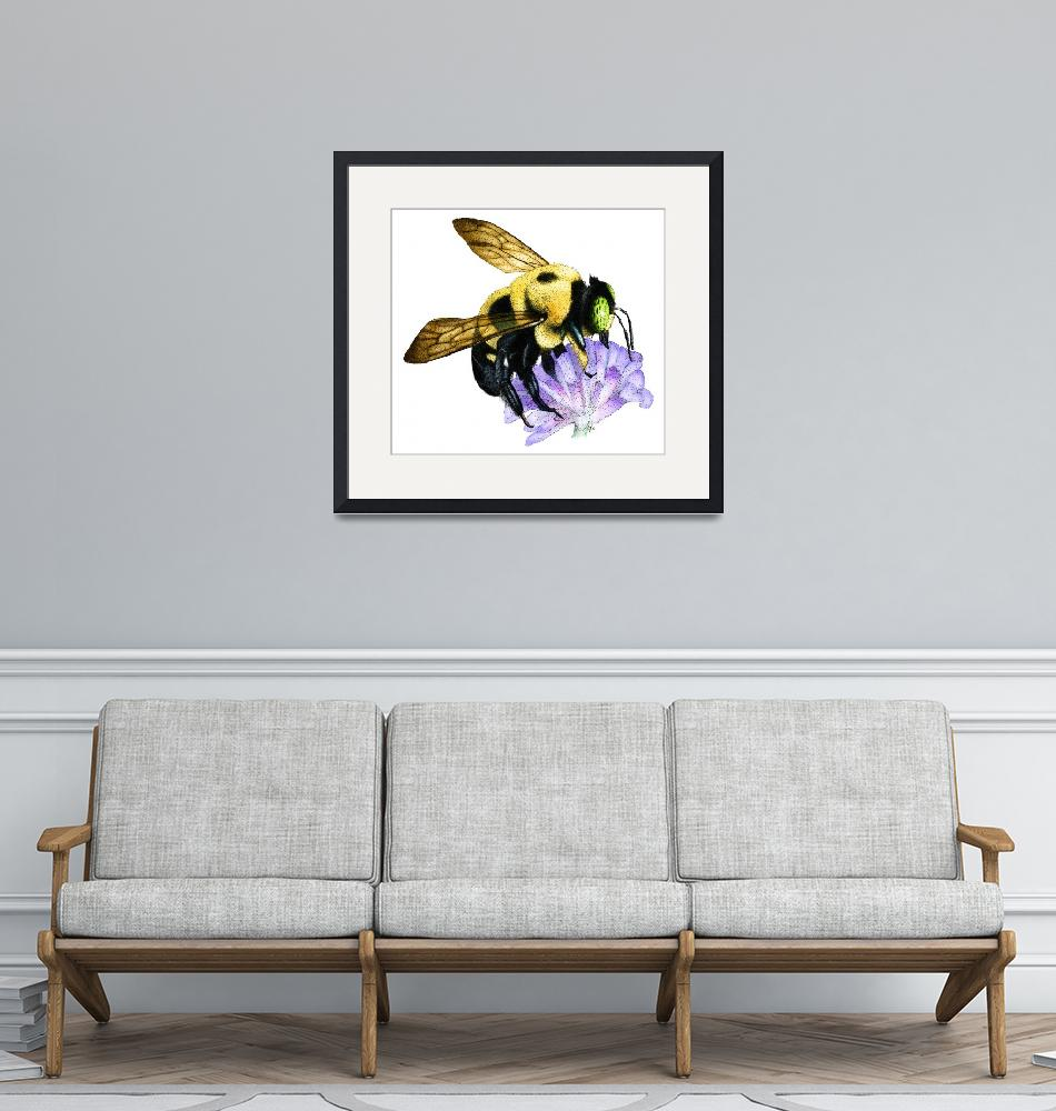 """Common Eastern Bumble Bee""  (2009) by inkart"