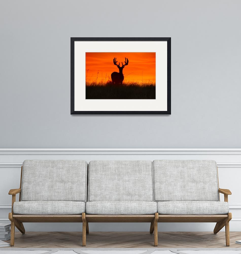 """Buck Silhouette at Sunset - landscape""  by PhotographicsUnlimited"