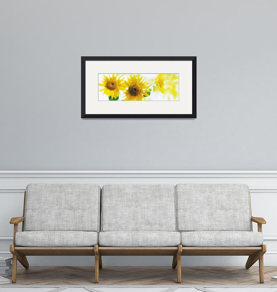 """Sunflowers""  by Panoramic_Images"