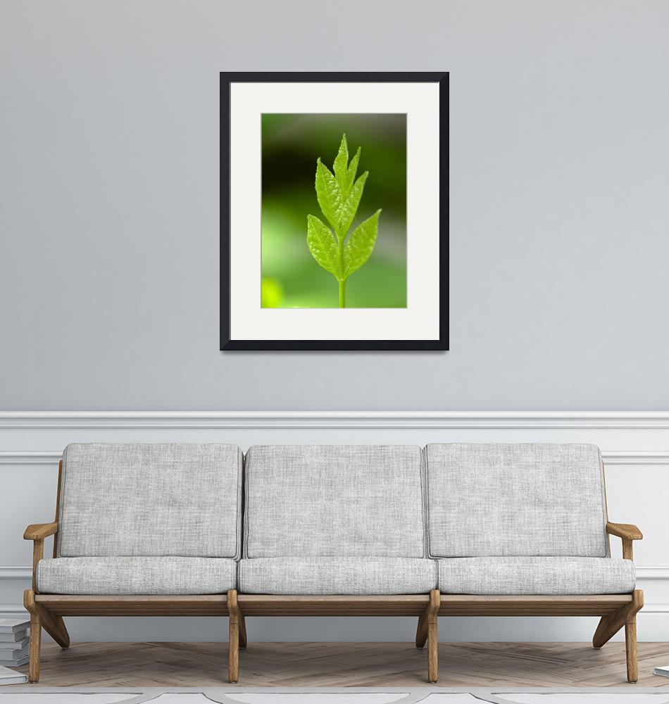 """""""Green young leaves""""  (2016) by mfmegevand"""