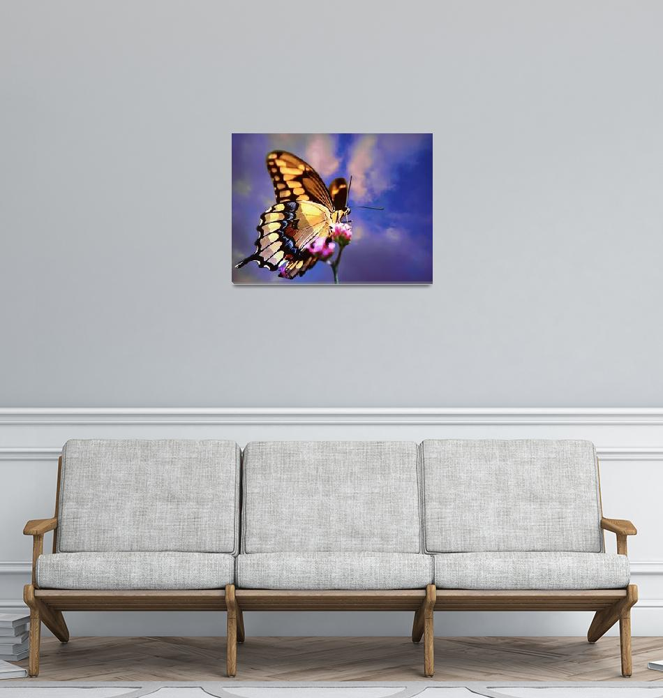 """""""Back  Swallowtail  Butterfly high in the sky""""  (2006) by frankreggio"""